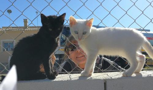 DANY & NOAH 🐾😍🐈#adoptme #adoptcats #adoptdontshop #cats  https://t.co/2OqeUi13qP https://t.co/aTzUTEs3w1
