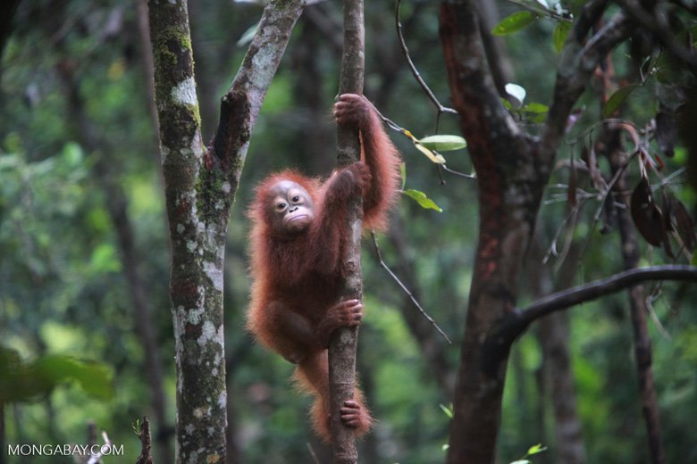 RT @mongabay: Borneo study explores links between farm expansion and deforestation: https://t.co/BACEsbWYza https://t.co/EOiiUL6NbA