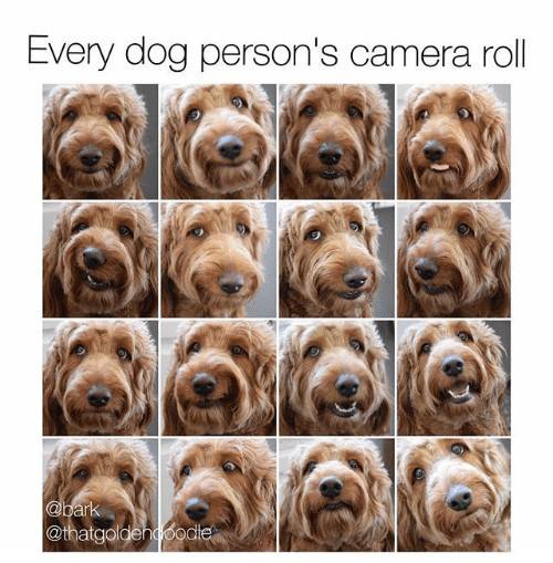 If your camera roll doesn't look like this, do you even own a dog?? Show us the last pet pic in your camera roll! https://t.co/YkxAwOGXpV