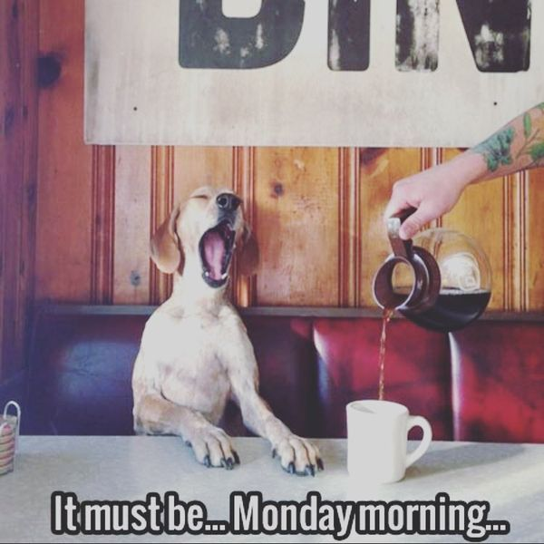 Puppies + Coffee. What else could you need on Monday morning? #vieravet #monday https://t.co/5F9d3BYD1V