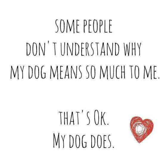 My Dog = Family. Do you agree? #vieravet https://t.co/oZtLFGMJ5s