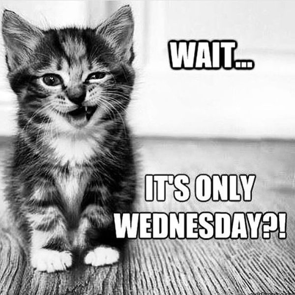 Yep, it's #HumpDay. Make the most of it! #vieravet #humpday https://t.co/uP6KRggRSE