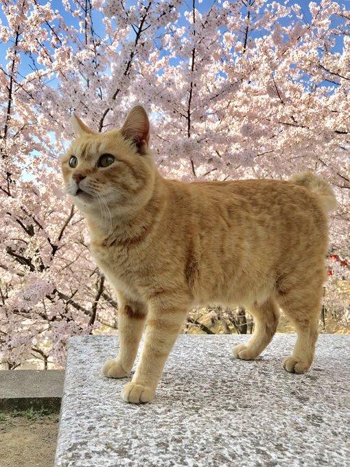 bijutsu1さんのツイート画像
