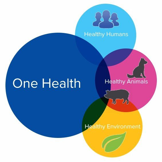 test Twitter Media - Govt. of #India moves closer to adopting #OneHealth approach, including compulsory national livestock immunization, to stem tide of antibiotic resistance #AMR https://t.co/EhseOCN5my @timesofindia https://t.co/5fuFL2x1Wp