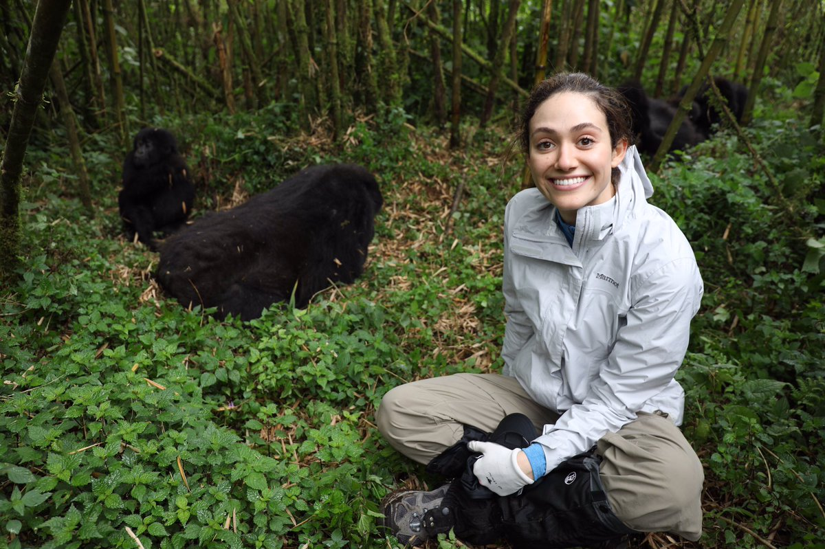 Stay tuned for updates on our beloved gorillas each month! @GorillaDoctors https://t.co/jbQISzYLPE