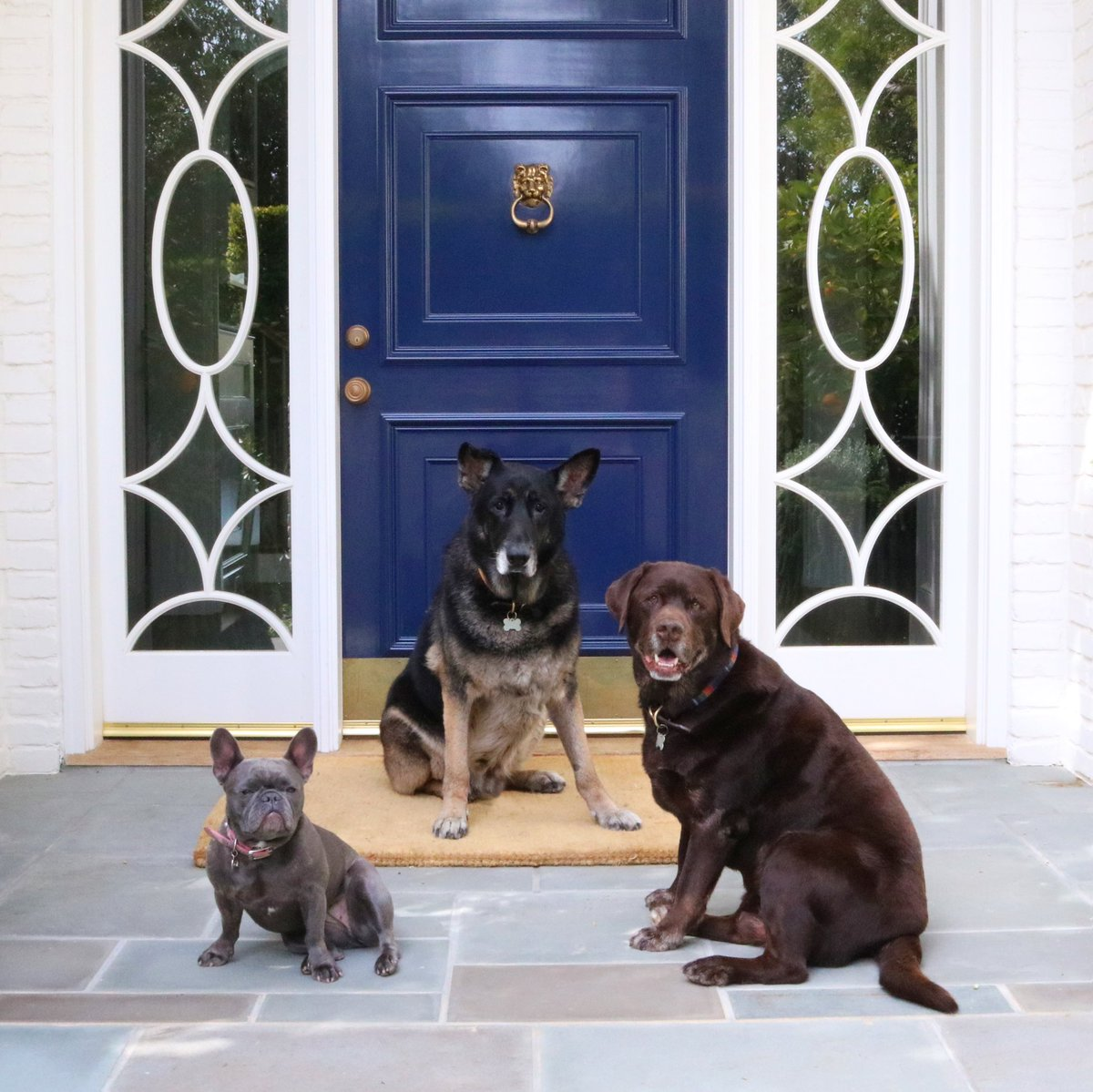 So glad I get to come home to these faces every single day! ????❤️ #LoveYourPetDay #pepper #nash #hank https://t.co/ImFkpc0n6p