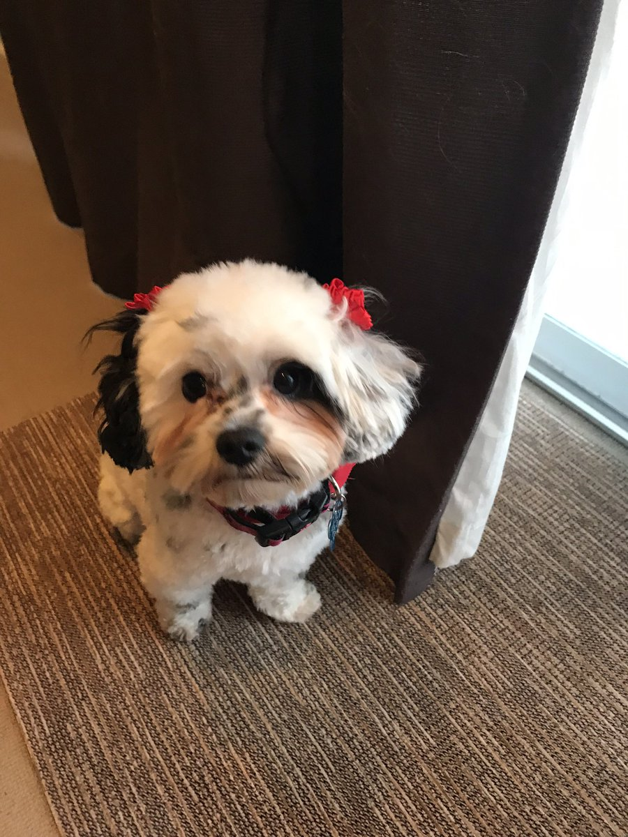 RT @_H_E_A_T: #LoveYourPetDay show me cuter pooches. https://t.co/99PUFjyuJk