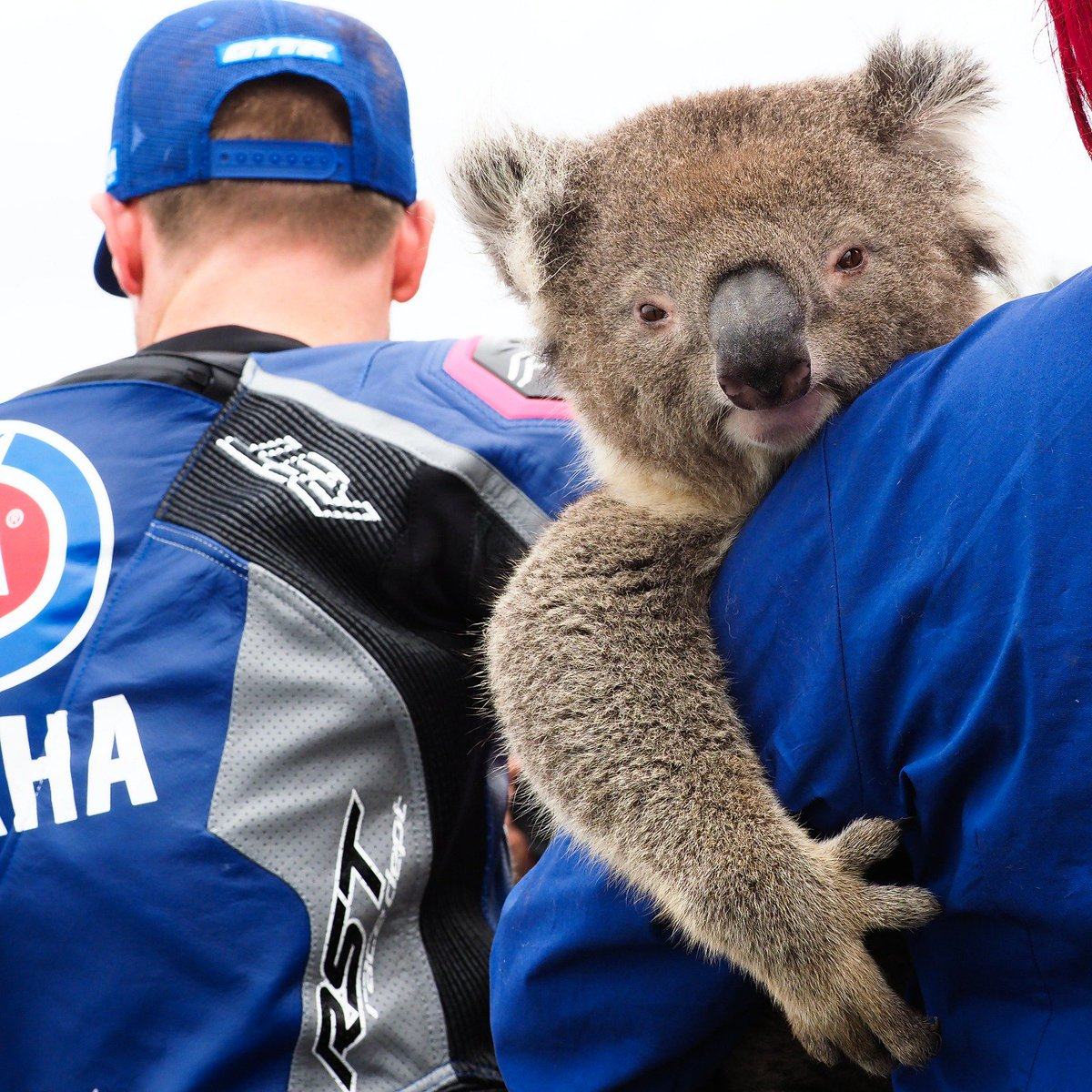 test Twitter Media - Warming up with the locals 🐍🐨 Before the #AUSWorldSBK 🇦🇺 gets underway some riders had the chance to get up close to some of Australia's most iconic animals😍  #AUSWorldSBK 🇦🇺 https://t.co/dMBnCZMYHe