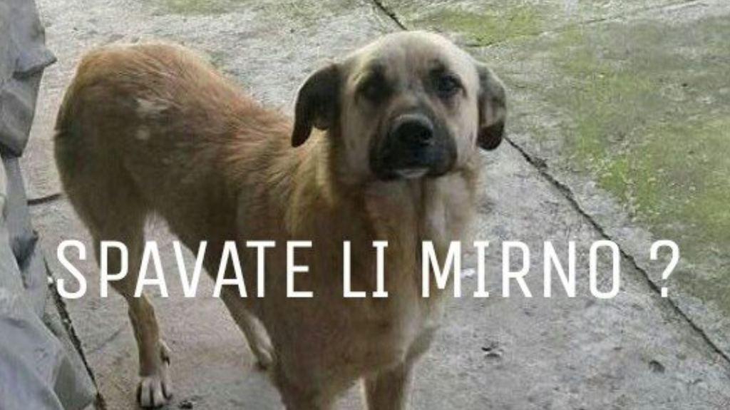 STOP killing dogs in Sabac-Serbia! Plz sign: https://t.co/PSEz3cpE7b https://t.co/joKSphBtEb