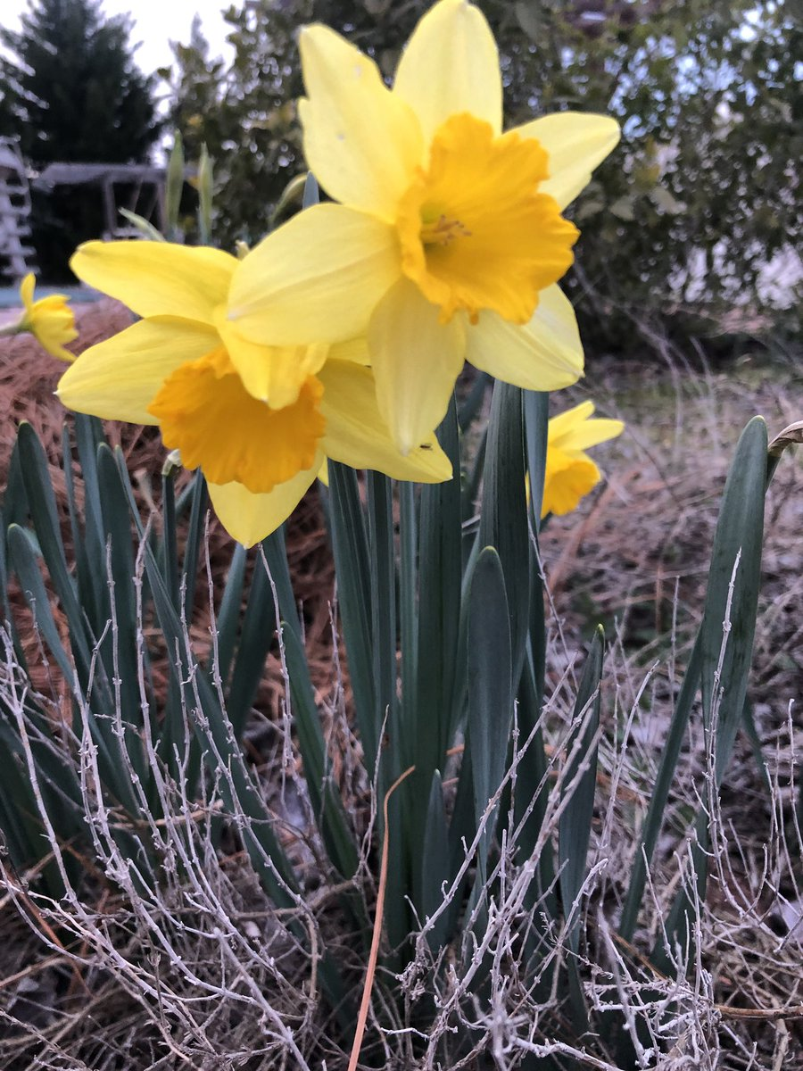 #Spring in #February.....#ClimateChange is real, enjoy this rainy day! #NorthCarolina https://t.co/BP2H4KoZiM