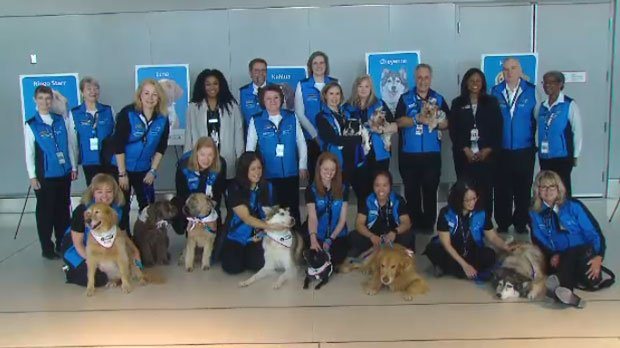 Therapy dogs to roam Toronto's Pearson airport to relieve travellers' stress