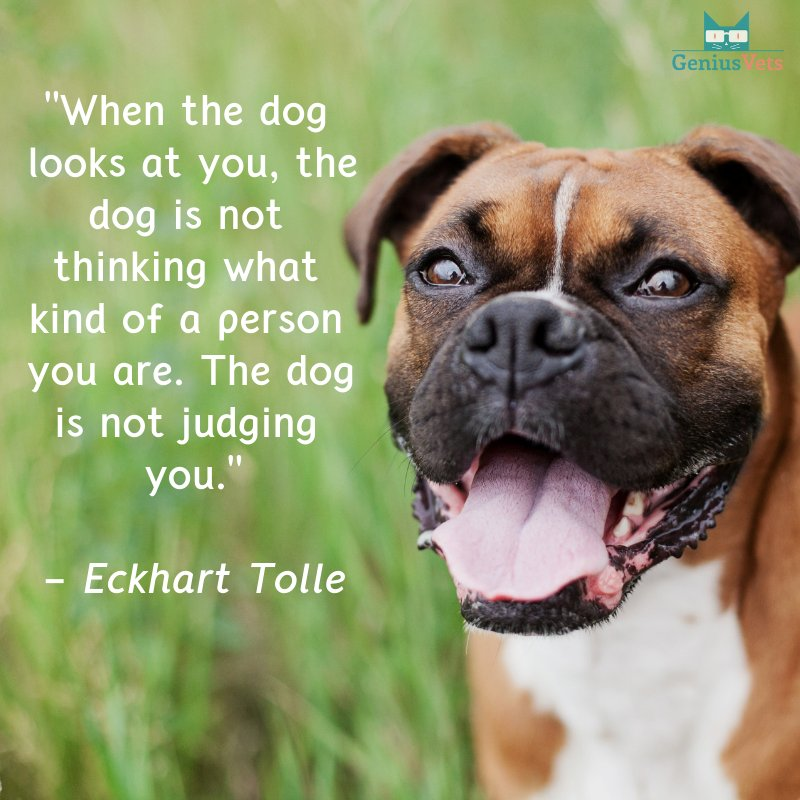 <3 if you think dogs are pretty amazing! #vieravet https://t.co/GfIDVtVXbU