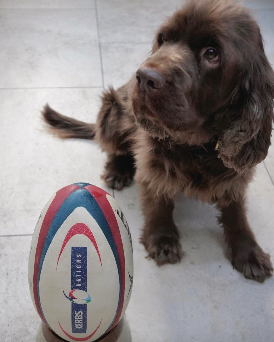 Eyes on the ball, Muffin. #Hackett #SixNations #Rugby https://t.co/7yu8Ve9Bfl