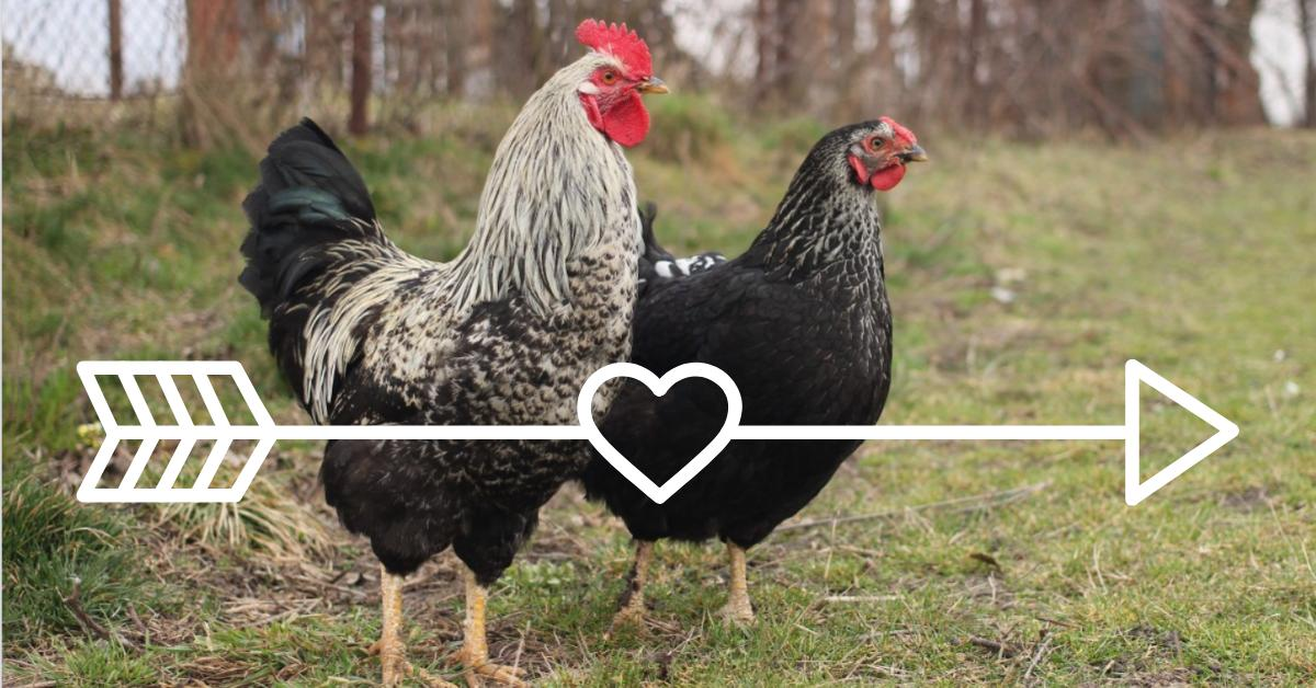 RT @humaneleagueuk: #HappyValentinesDay ! Let's spread the love to all animals today ❤️ https://t.co/NwXvjenbHi