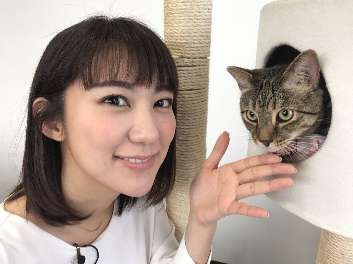 test ツイッターメディア - 北村まあさです。こちらは猫のカイくんです。カイくんはジャンプをしたり爪を研いだりのびのび元気な男の子なのですが、カイくんの健康状態が「見える」トレたまです。テレビ東京系列WBSでお伝えします。 ★そのほか番組の詳細はHPで! https://t.co/g78YiijdQ7 https://t.co/3ynZ5ojcAd