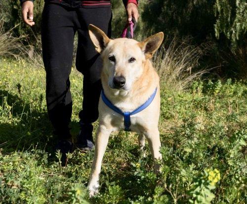 Nico #adoptme 🐾😍💕  https://t.co/YaOoXGn2nF  #AdoptDontShop #dogsoftwitter #dogsarejoy #adoptdogs https://t.co/g79rJsHoJf