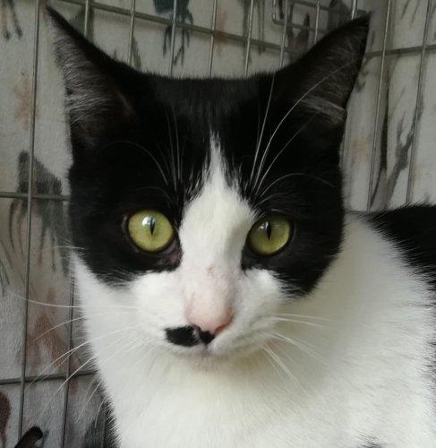 💕DARIO💕🐾🐱🐈🥰😍#adoptme  https://t.co/9ztadxRTYb  #AdoptMe #AdoptDontShop #adoptdontbuy #CatsOfTwitter https://t.co/j4gVZ0SIEE