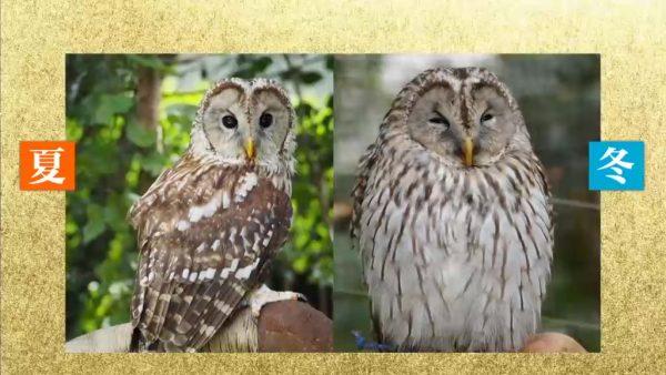 """test ツイッターメディア - 冬の動物園しか見られない「インスタ映え動物」のおすすめとは  """"冬だからこそ、動物園は面白い""""という人もいるほど、この時季の動物たちは特別な表情を見せてくれるそうです。  >>「東山動植物園」と「のんほいパーク」(豊橋総合動植物公園) https://t.co/o4Fh0MfyuL https://t.co/n5EP7j23ac"""