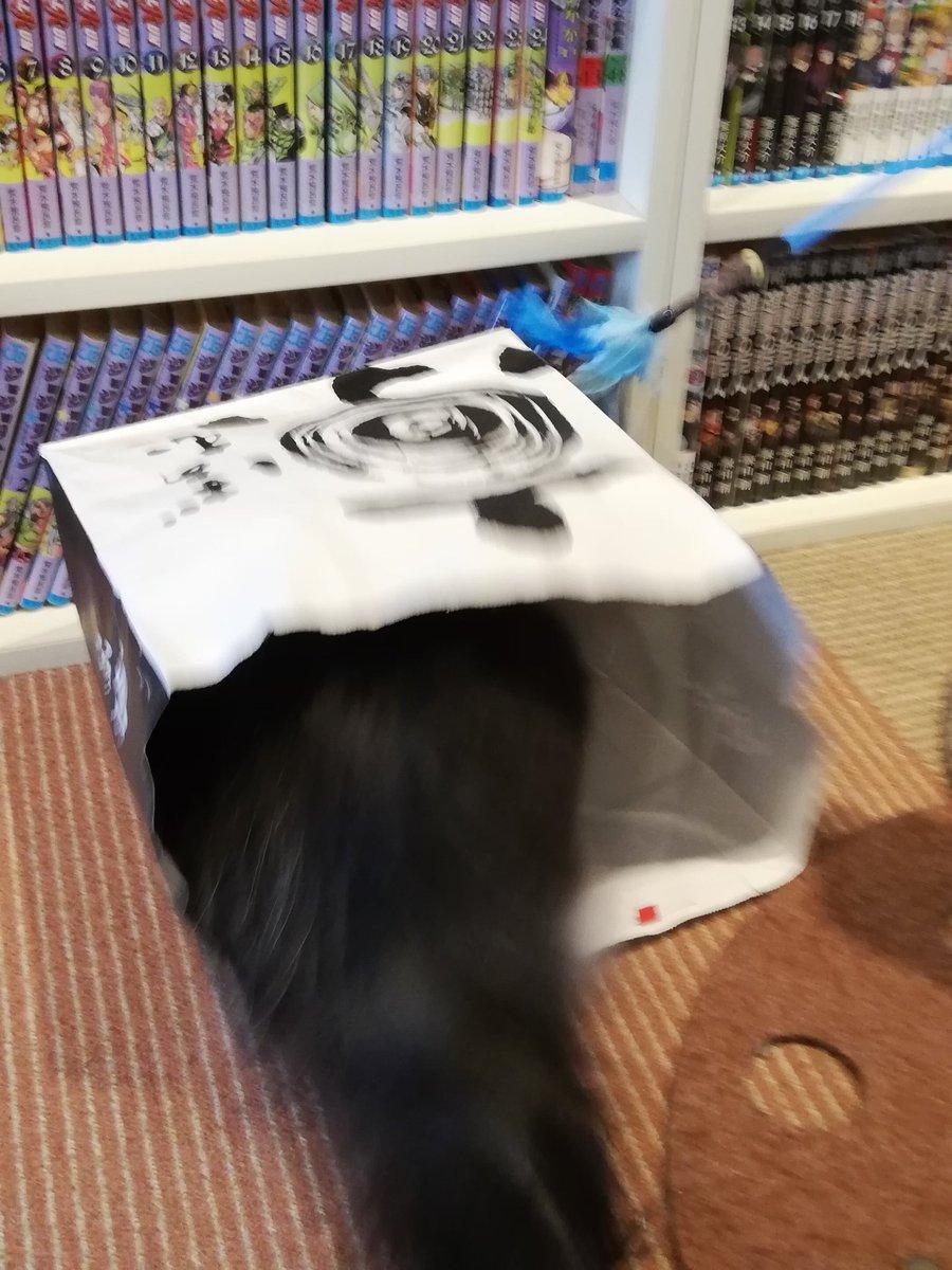 test ツイッターメディア - 無敵艦隊「京ばあむ紙袋」 こんなに🐱たちに好かれるなんて 羨ましい。:+((*´艸`))+:。💕💕 確かに、何度か食べたが 京ばあむは旨い🍴😆✨ https://t.co/yGA3S1zKBp