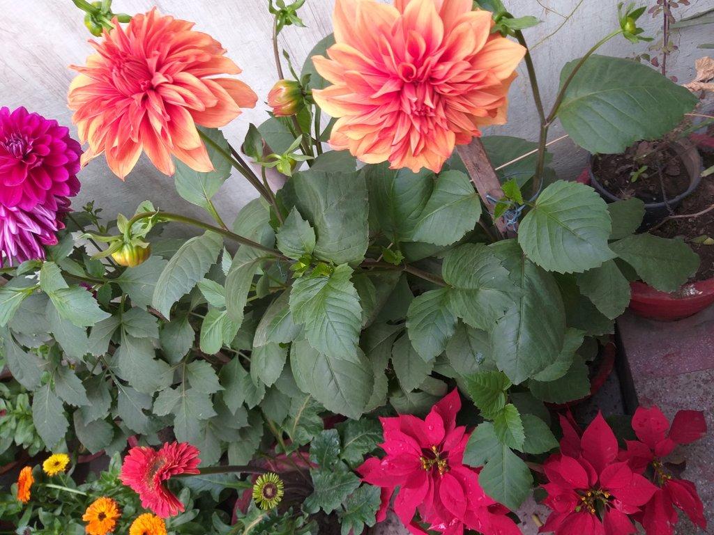 Orange flowers... Red leaves... https://t.co/lRYZGakWVz