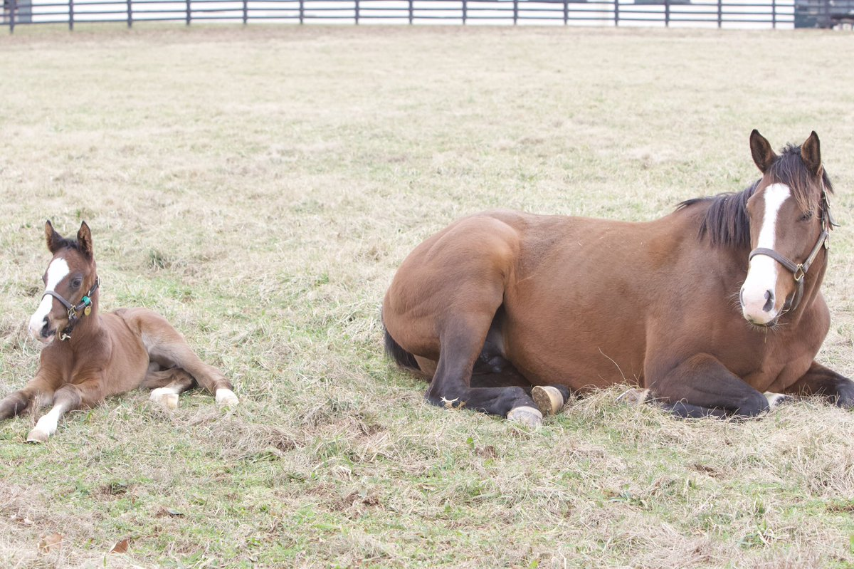 RT @LanesEndFarms: Sunday's are for recharging the batteries #farmlife https://t.co/6U1FhiZbDn