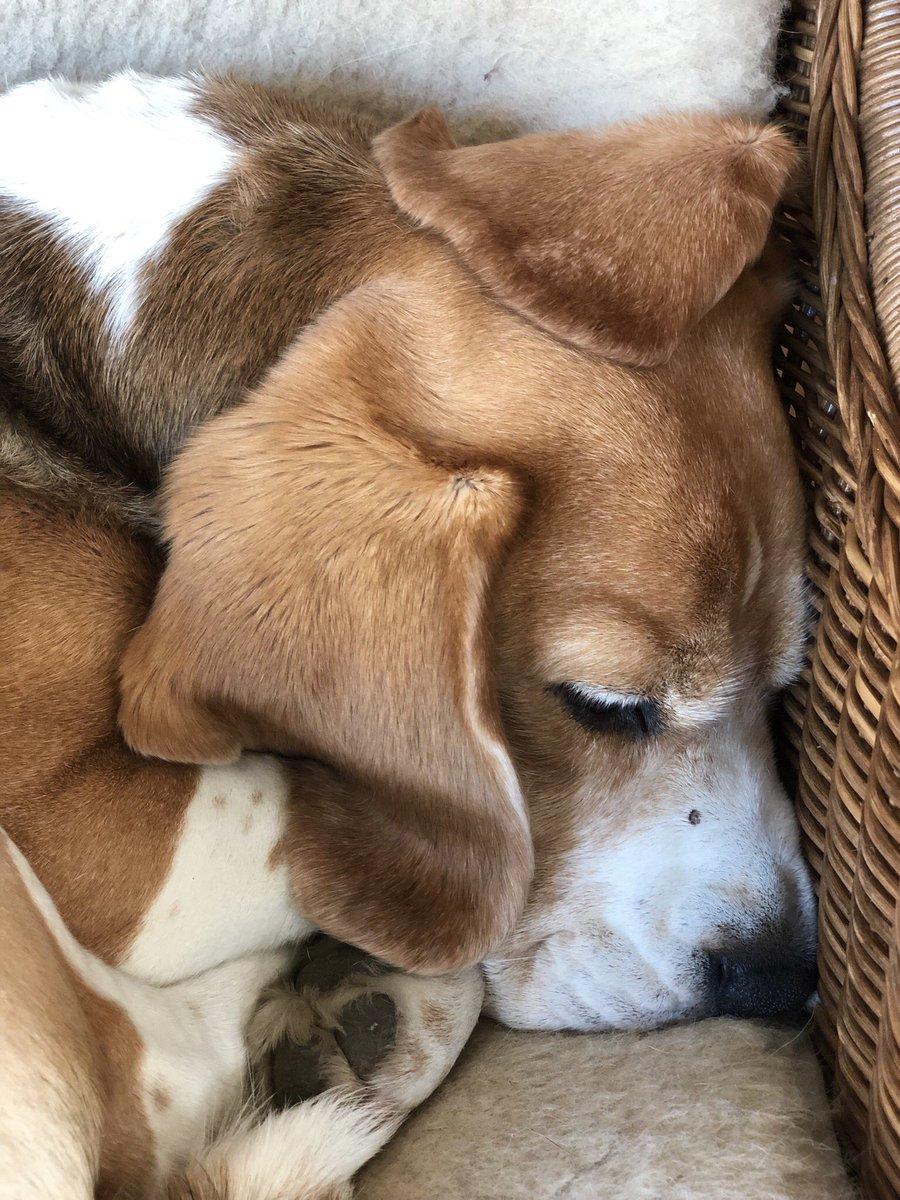 RT @7_gscheid: Müde bin ich, geh' zur Ruh', deck mich mit meinen Ohren zu <3 https://t.co/kwARAdG65k