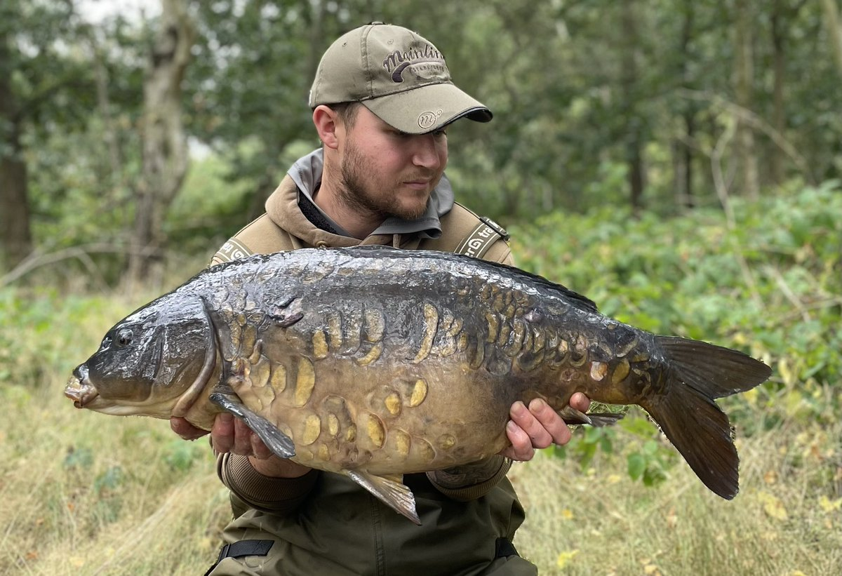 Mega looking old mirror and common from my last session @MainlineBaits #cell #carpfishing #mainline<
