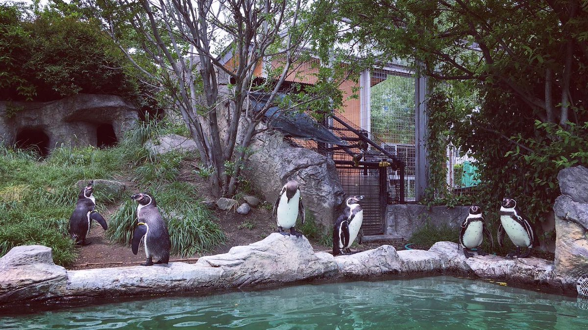 test ツイッターメディア - #ぬいぐるみ軍団 (ミニ・ネイ君,王の人形【成体】,コガタ君,およびグレープ君) in #信州 #長野 #飯田 #飯田市動物園 やっと軍団の園館探訪ぽくなっただよw ご存知 #ペンギン募金箱 もありました。 #フンボルトペンギン https://t.co/lnpcuJo0Fe