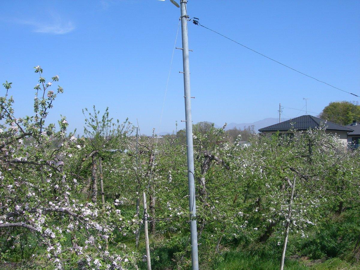 test ツイッターメディア - 長野県佐久市日本共産党佐久地区委員会事務所隣のリンゴ畑の林檎の花が見頃です。 https://t.co/cIYM3d2d8n