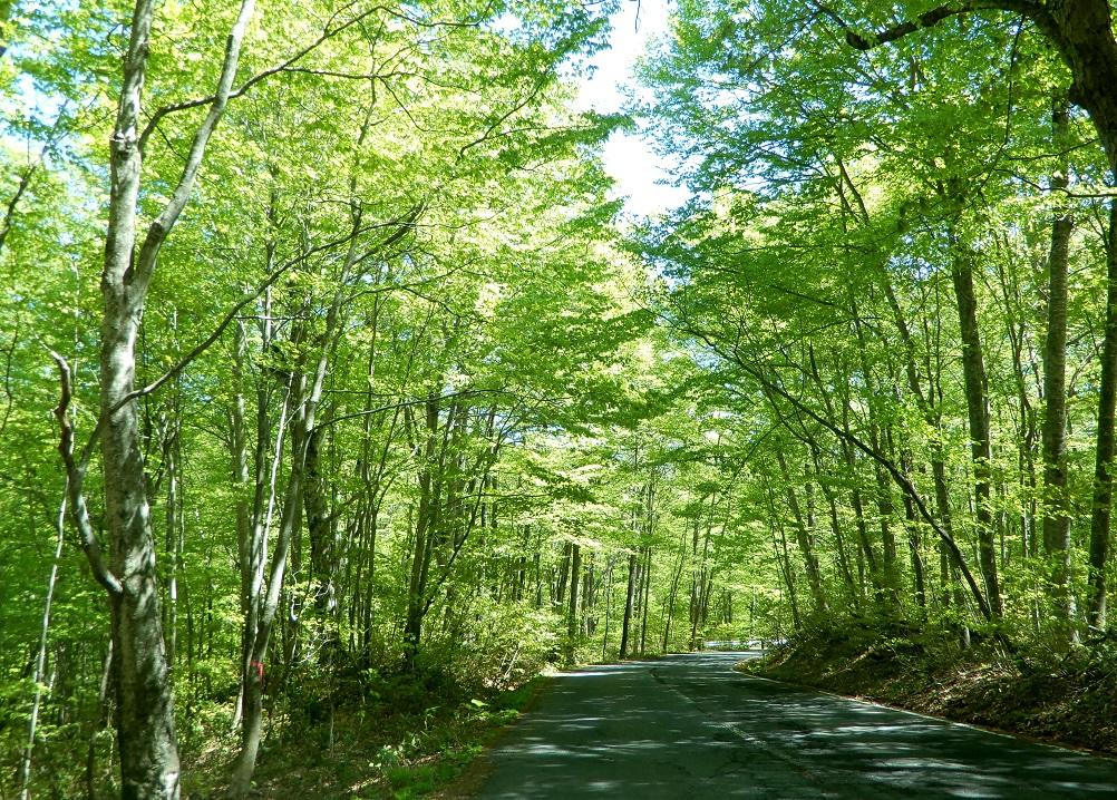test ツイッターメディア - オハヨウ、金曜日の弘前は晴れ、+8℃の朝です。 土、日は天気が怪しいと言っている。 青森県の春から夏。 八甲田越えは残雪と若葉を楽しめる絶好のドライブコース。 標高で季節を体感できるこの時期、「風景は生もの」を実感。 急がずゆったり疲れた目の休憩。 車間距離もソーシャルディスタンス。 https://t.co/0qzKo1esjp