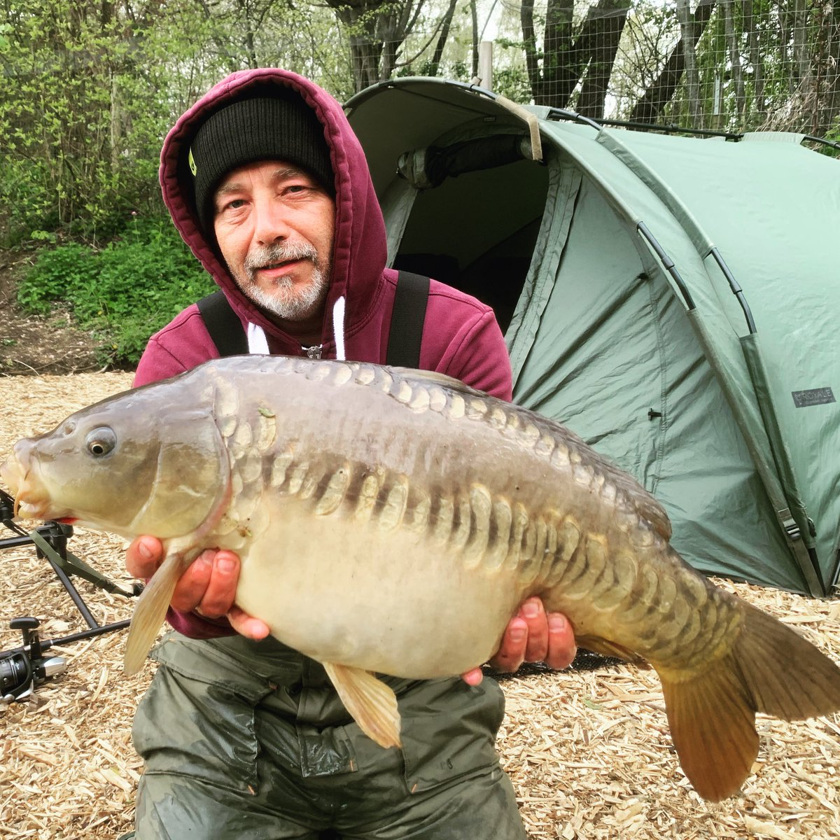 Stunning Mirror Carp #carpfishing #mirrorcarp #carphunter #ukcarpfishing https://t.co/wZcVqUHort