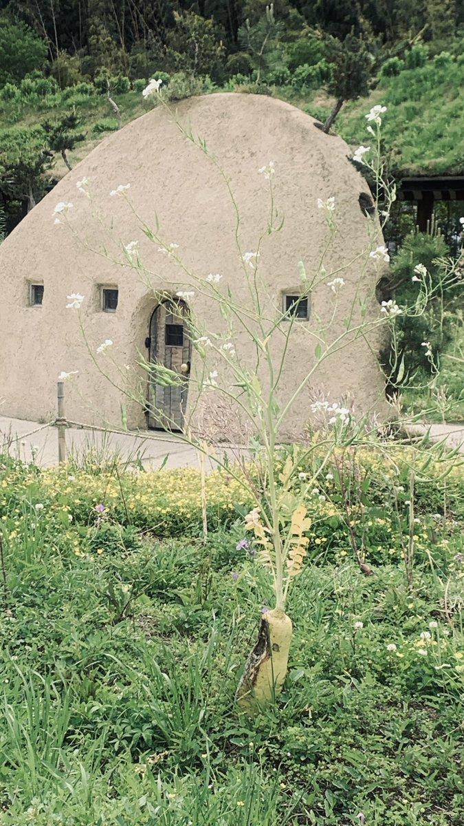 test ツイッターメディア - ラ コリーナ近江八幡 CLUB HARIE クラブハリエ  草屋根にお花が咲いてたり、 銅屋根や至る所にある建造物が 自然の中に根づいてる🌱  緑木石➕スイーツ 各ブースのショップなど 雰囲気を楽しめた  バームクーヘンやライスコロッケ😋美味  #スイーツ #スイーツ好きと繋がりたい  #バームクーヘン https://t.co/6nv5DFm2I8