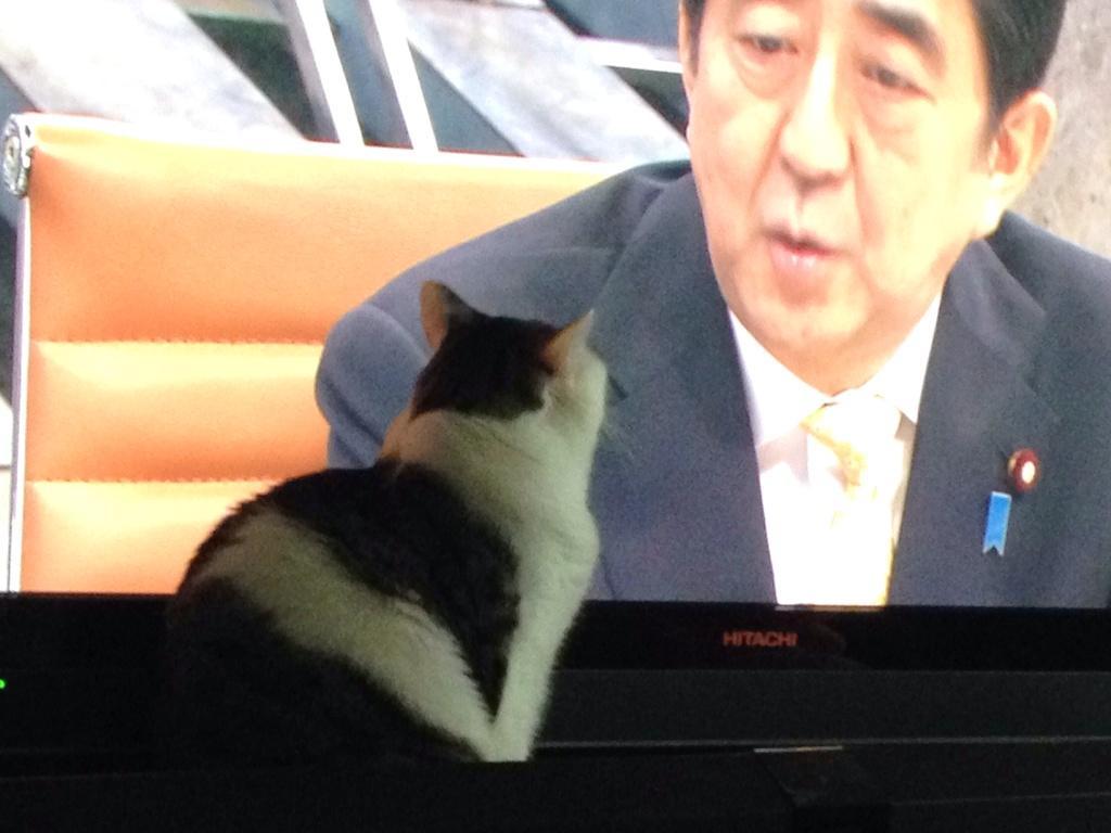 test ツイッターメディア - @media_otb 和田さん、何甘い事言ってんですか。ねこにも好かれる我らが安倍ちゃんですよ。 https://t.co/Sibna9nHav