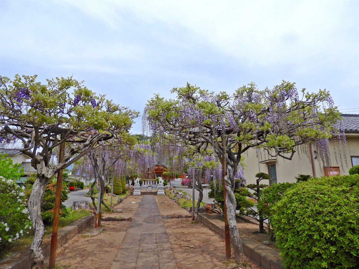 test ツイッターメディア - 長野県佐久市円満寺のツツジとボタンの花です。 https://t.co/NPfyQ5oDkm