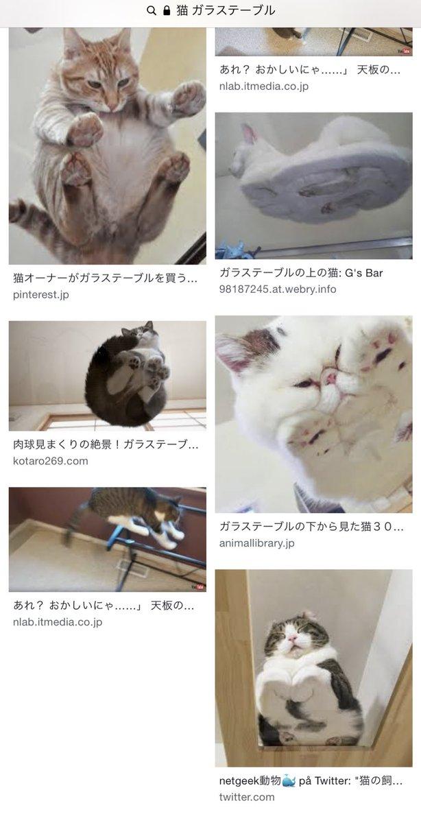 test ツイッターメディア - 私は仕事で疲れると「猫 ガラステーブル」で画像検索をして、 ガラステーブルの神様に「来世はどうか私を猫カフェのガラステーブルにしてくれ」とひとしきり祈ってから仕事に戻るんだ…。 https://t.co/kebrYhHaEk