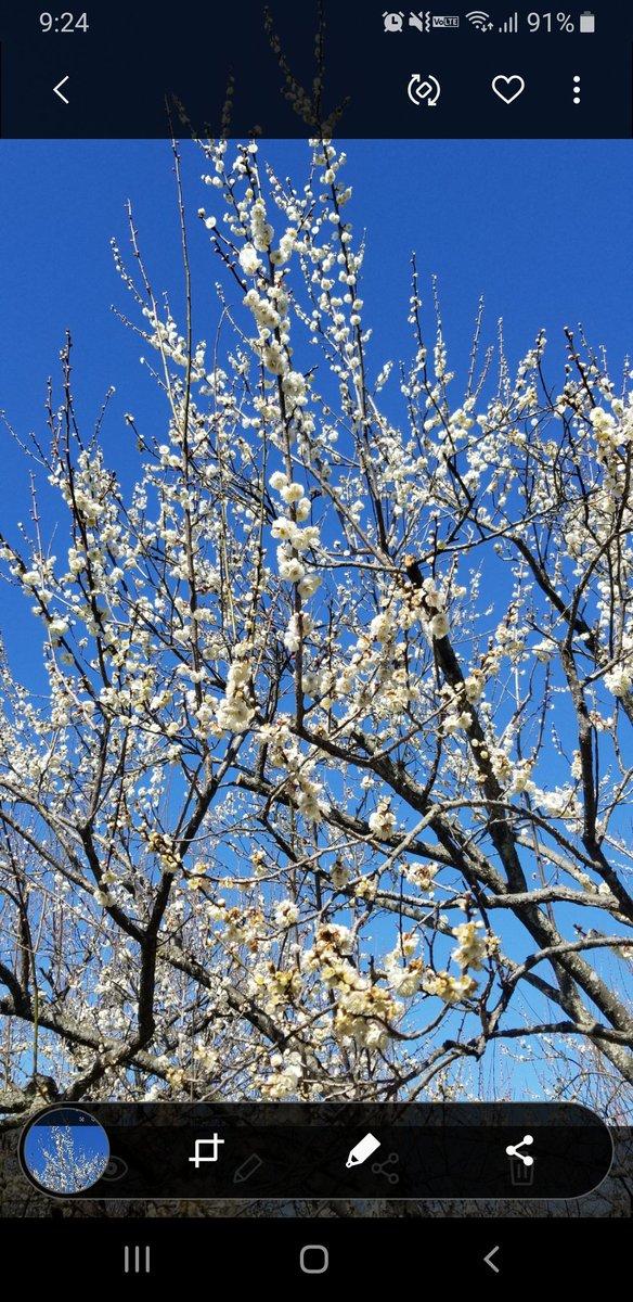 test ツイッターメディア - #TLを花でいっぱいにしよう 昨年2月の水戸の梅 https://t.co/JTNk8jfWoe