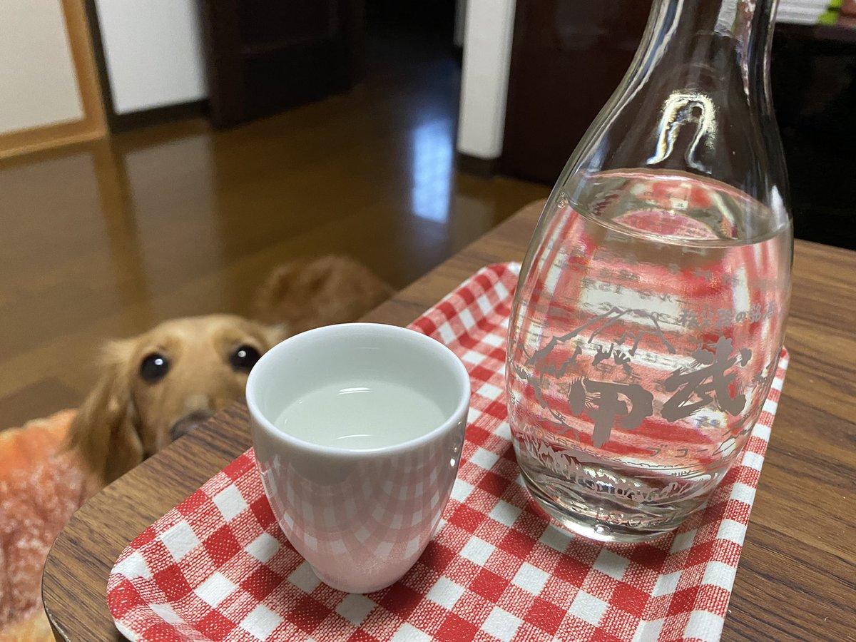 test ツイッターメディア - ちょっと寒い一日だったので今日は燗酒✨ 秩父市の武甲酒造さんの武甲おかんビン  久し振りにちょっと苦手系のお酒でした💦  私はこういう、昔ながらの日本酒!って感じの味が苦手っぽいと再確認😅  でも少量だったしサクッと飲みきっちゃった。  #日本酒 #埼玉の地酒 #秩父のお酒 https://t.co/dIBPX4lpa4