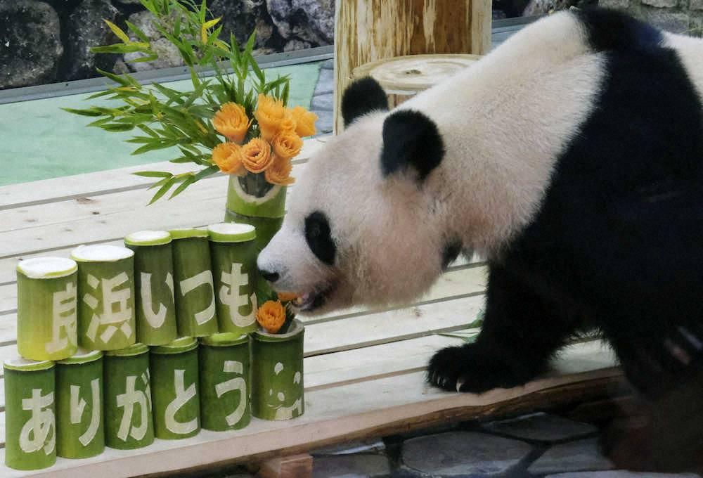 test ツイッターメディア - 後れ馳せながら… 今月は #母の日 がありましたね🌹  皆様、様々な過ごされ方をし 「感謝の気持ち」を伝えたりしたのだと思いますが…  和歌山県にあるアドベンチャーワールドでは、10頭の母である良浜(らうひん)へ竹とカーネーションをかたどった人参をプレゼントしたとか🐼 https://t.co/CgxALXRtEU