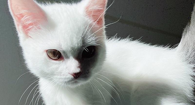 """test ツイッターメディア - 200RT 「子猫とは思えない」「前世はゴルゴかな?」 飼い主を起こしに来た子猫の表情が""""必殺仕事人""""の貫禄 https://t.co/JEA40c8wQx https://t.co/zury9gNn8Q"""