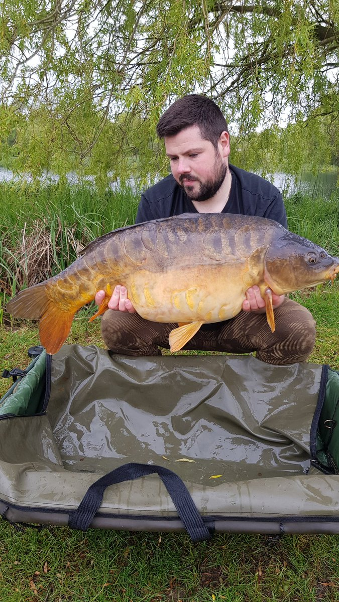 3rd of the trip.. absolutly beautiful  Coming in at 29lb   #carp #carpfishing #mainline #carpy https