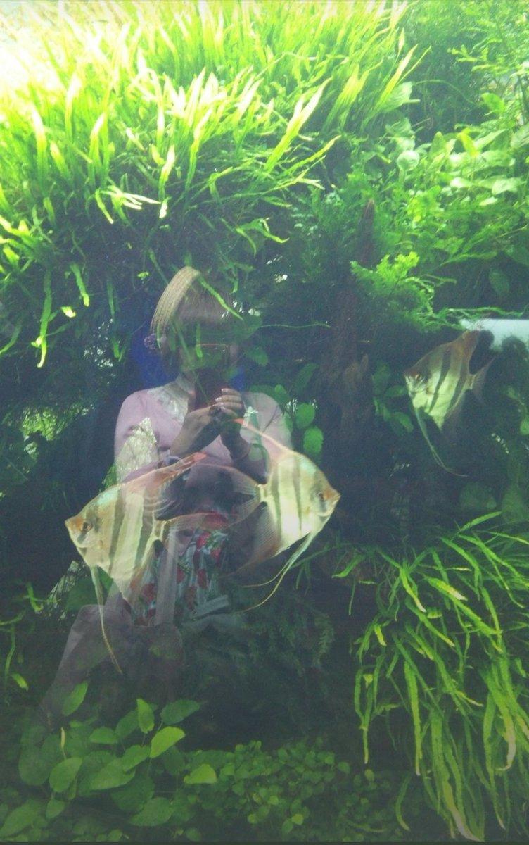 test ツイッターメディア - 6年前の昨日は、初めて今の夫とデートした日らしいです🍀 🐠すみだ水族館にて。(この頃まだ私がぽちゃってるのは見逃して💦) 他にもスカイツリーの写真とか沢山ありました🌷 懐かしいな✨ スカイツリー、また行きたい‼️ #すみだ水族館 https://t.co/p3Fe8cD0xz
