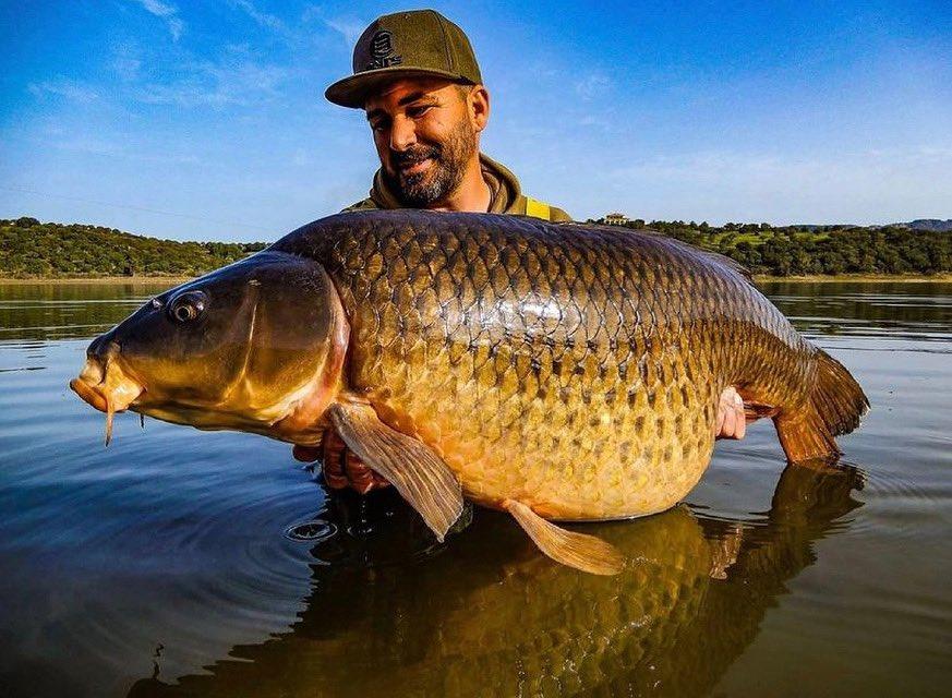 Big shout to David for this incredible common!! 👊🏻🎣   #BigCarpBuzz #Carp #CarpFishing #Fish