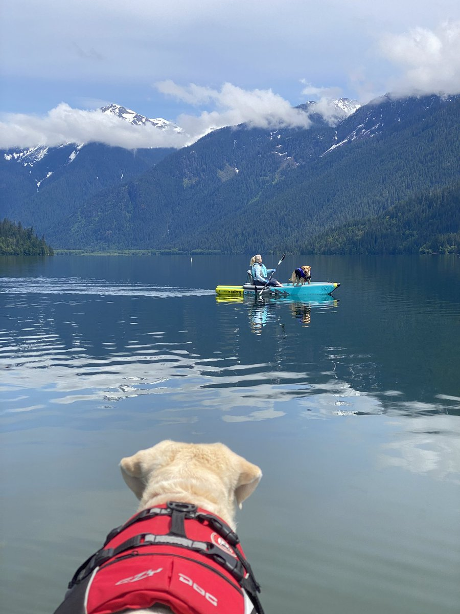 test Twitter Media - Great camping trip on Baker Lake in spite of rain, aggressive cougar and kayak overturned in tributary with glacial COLD water. #adventuredogs #BOTE #kayaking https://t.co/48KDyy42BN