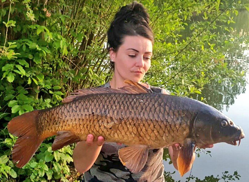 A couple of floater loving commons from yesterday evening. 😍😘❤🎣 #carpfishing #dogbiscuits