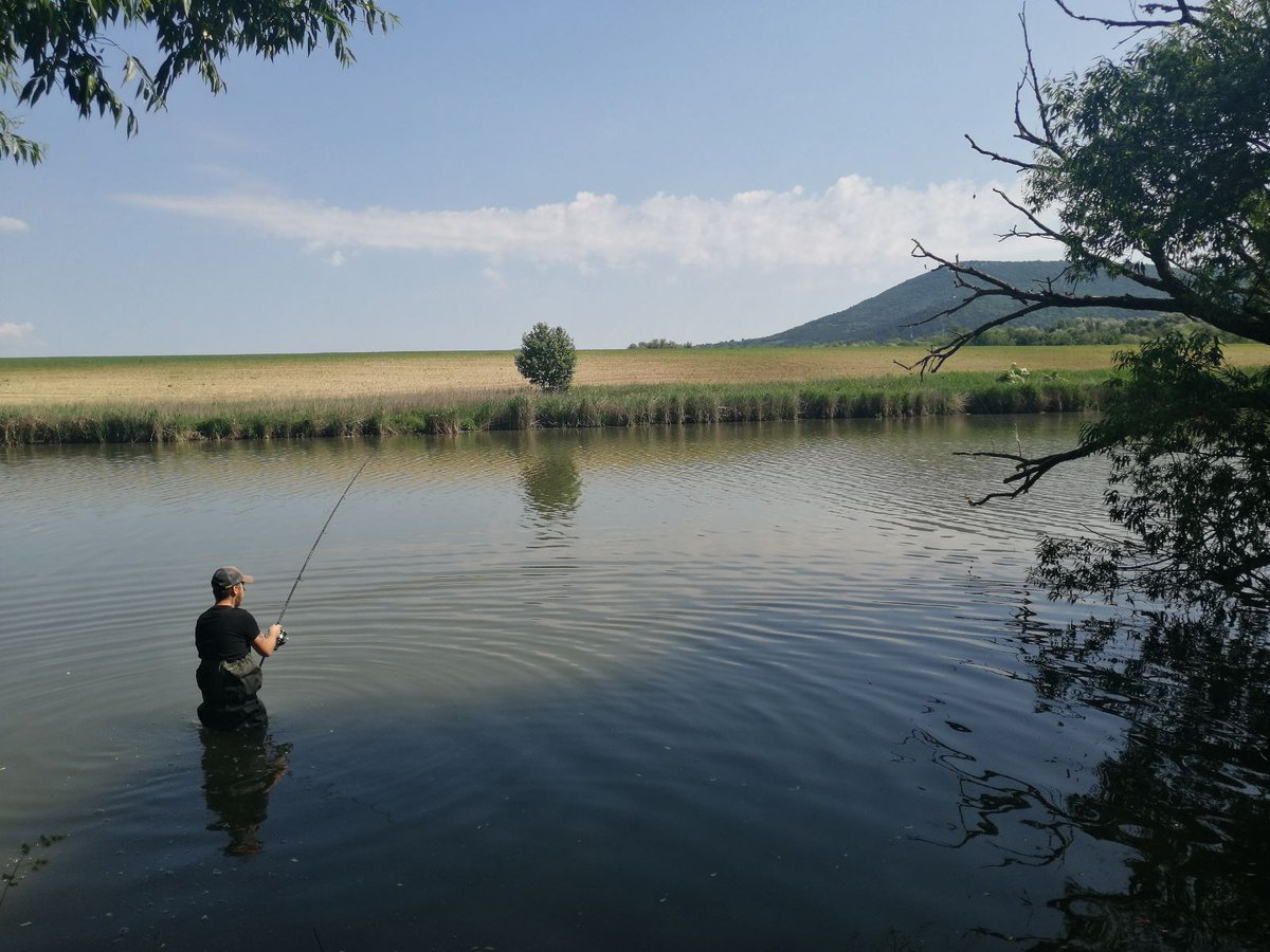 Jungle Carp  #carpfishing #fishing #<b>Water</b> #fish #junius https://t.co/TiLWtO5bDm