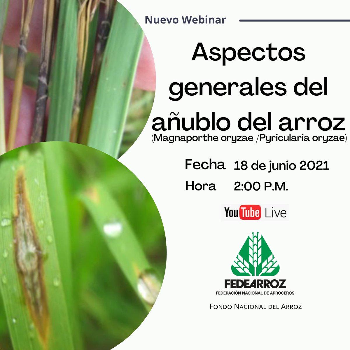 """test Twitter Media - Fedearroz FNA realizará un nuevo webinar sobre el añublo del arroz, causado por """"Pyricularia oryzae"""". Esta enfermedad puede causar grandes pérdidas en la producción, tanto en arroz de riego como de secano.  Acompáñenos y aprenda como actuar: https://t.co/Pa3coiZaru https://t.co/EAhDC1JvwX"""
