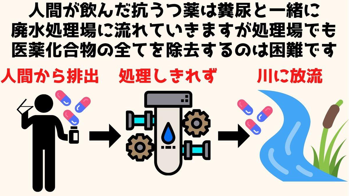 糞尿 ザリガニ リットル 水槽 エサに関連した画像-03