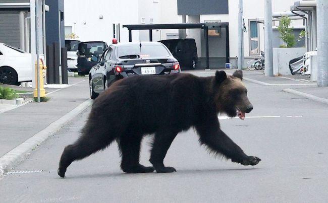 test ツイッターメディア - 記事、動画を更新しました ※動画の閲覧にはご注意ください  住宅街でクマに襲われ4人けが 札幌・東区 猟友会が駆除:北海道新聞 どうしん電子版  https://t.co/GJzABu1JB7 https://t.co/W8L9kAhAI2