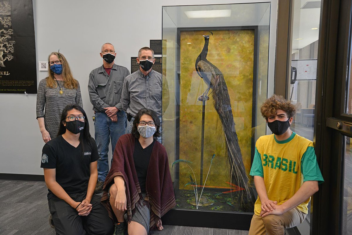 test Twitter Media - The peacock on display in Exley was recently updated to include new signage and fresh peacock feathers. The restoration team wants to use the exhibit as an opportunity to teach viewers about the restoration process.  https://t.co/jsTYVtwd9a https://t.co/6sxtKuWdkA