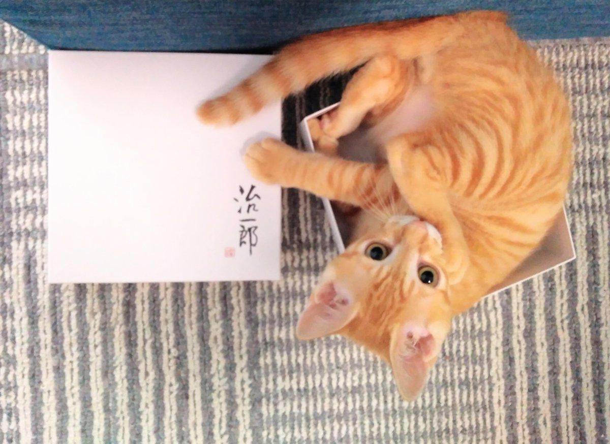 test ツイッターメディア - カフワはモシャスのじゅもんをとなえた!  #猫好きさんと繫がりたい  #猫 #今夜写真の動画アップ予定 #ドラクエ #モシャス #治一郎 #バウムクーヘン https://t.co/Qzs5mkV67K